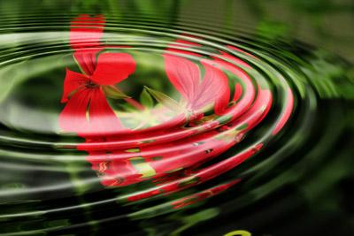 Relaxing water acene